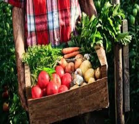 Te-gusta-comer-sano-comienzo-para-obtener-una-vida-mejor